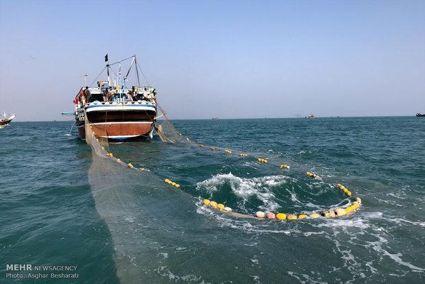 تورهای صیادی سرگردان مهم ترین عامل مرگ لاک پشت های خلیج فارس است