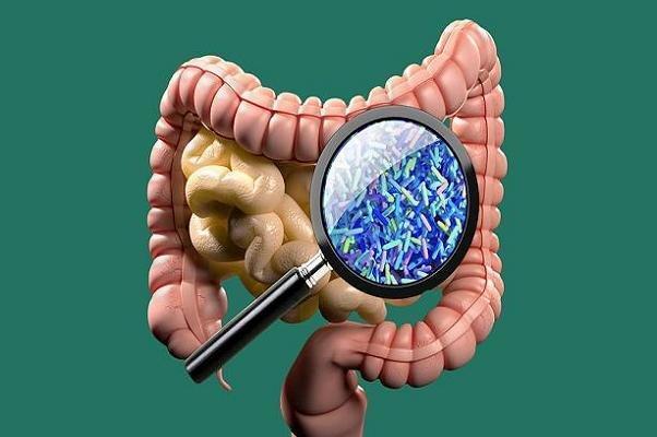 میکروبیوم های روده به حفظ دمای بدن در سرما یاری می نمایند