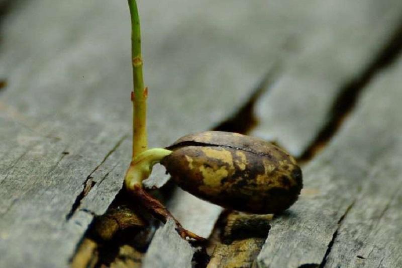 استفاده از هورمون طبیعی برای تسریع رشد گیاه