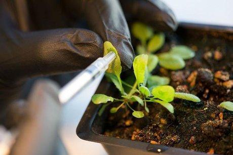کارایی پیل های سوختی با نانو باغچه بهبود می یابد