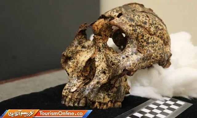 کشف جمجمه دو میلیون ساله در آفریقای جنوبی