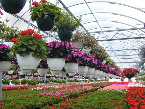 فراوری 110 میلیون گل زینتی در آمل، رتبه اول مازندران