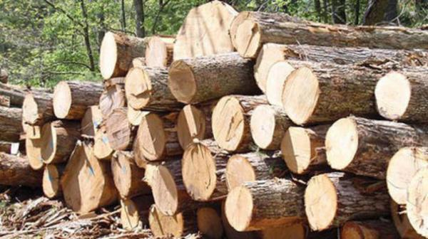 کشف 3 تن چوب قاچاقاز قاچاقچیان حرفه ای